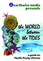 World Between The Tides cover